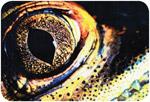 1997 Exposição Fotografando a Natureza