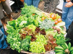 Alimentação e Biodiversidade