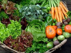 Agricultura e Agroecologia na cidade de São Paulo